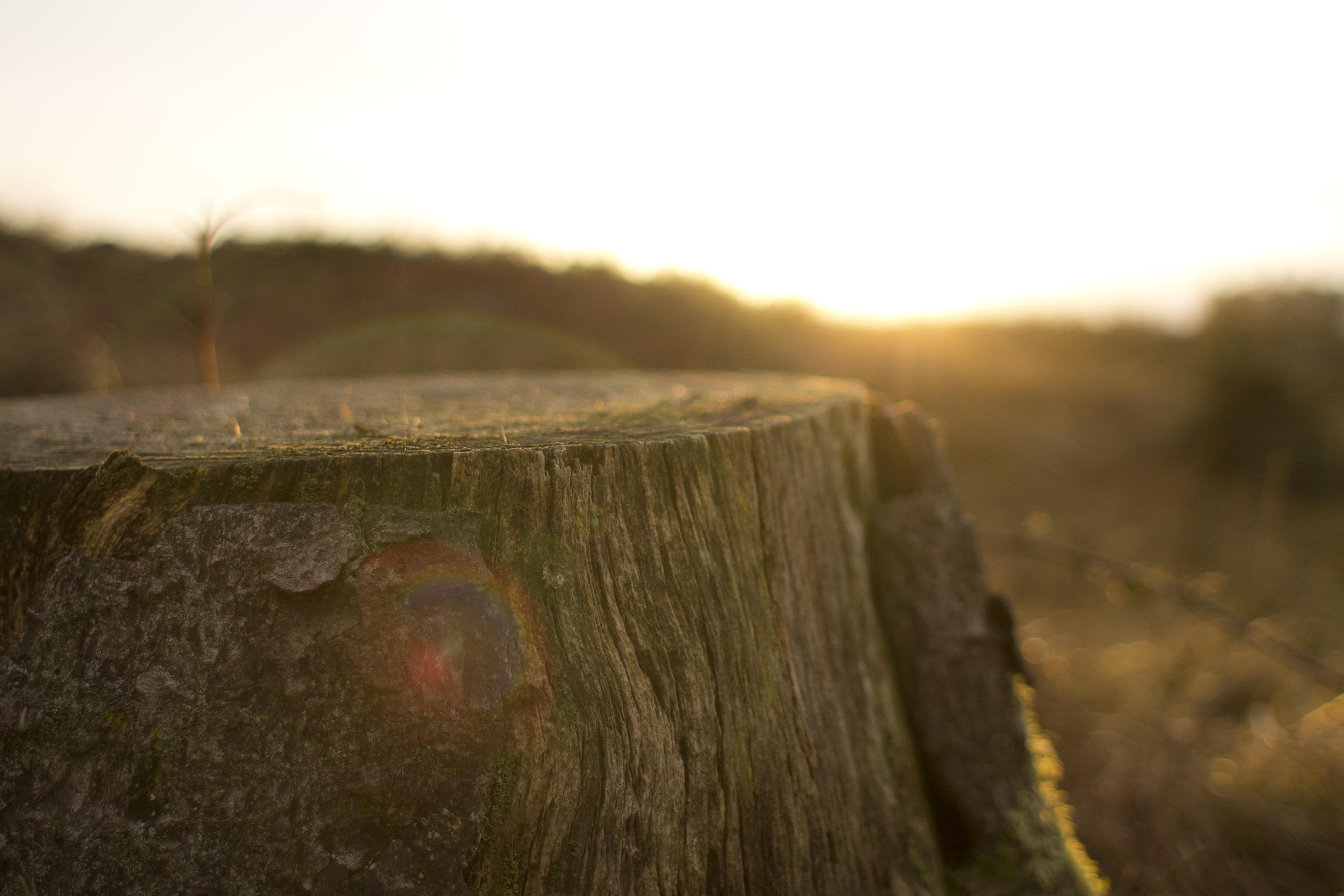 Træstub og rodfræsning